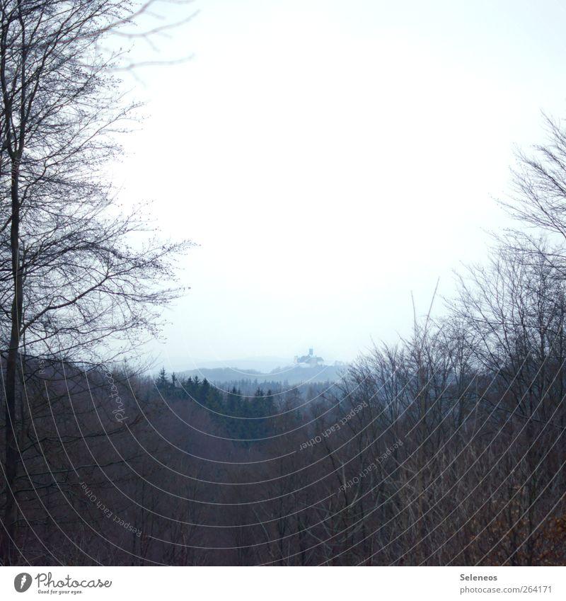 Ritterburg Himmel Natur Baum Ferien & Urlaub & Reisen Pflanze Winter Wald Ferne Umwelt Landschaft Herbst Berge u. Gebirge Horizont wandern Tourismus Hügel