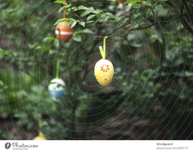 Einfach mal die Eier baumeln lassen Natur blau weiß grün schön rot Pflanze Freude Blatt schwarz gelb Frühling Religion & Glaube Kunst elegant Design