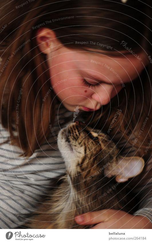 Treue Freundin Katze Mensch Kind Mädchen Tier Gesicht Liebe Auge Leben feminin Gefühle Kopf Haare & Frisuren Glück Freundschaft Kindheit