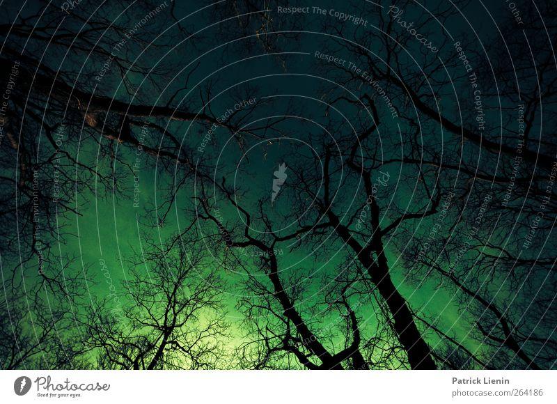 Made in the dark Umwelt Natur Landschaft Pflanze Urelemente Wetter Wind Baum Wald ästhetisch außergewöhnlich bedrohlich dunkel oben trashig Stress bizarr