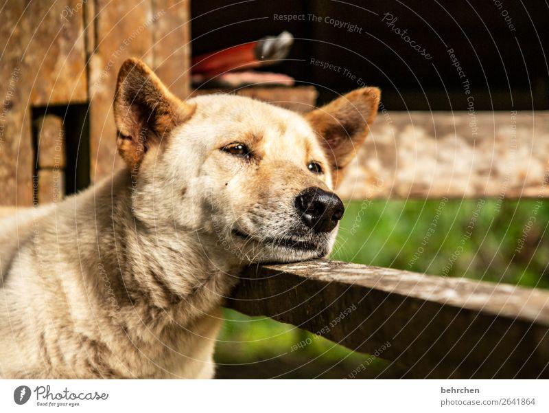 hundemüde Ferien & Urlaub & Reisen Natur Hund schön Erholung Tier Ferne Umwelt Auge Tourismus Freiheit Ausflug Abenteuer niedlich schlafen Nase
