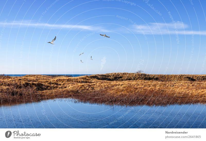Maritime Stimmung auf den Vesterålen Himmel Ferien & Urlaub & Reisen Natur blau Wasser Landschaft Meer Wolken Tier Ferne Gras Tourismus Freiheit Vogel braun