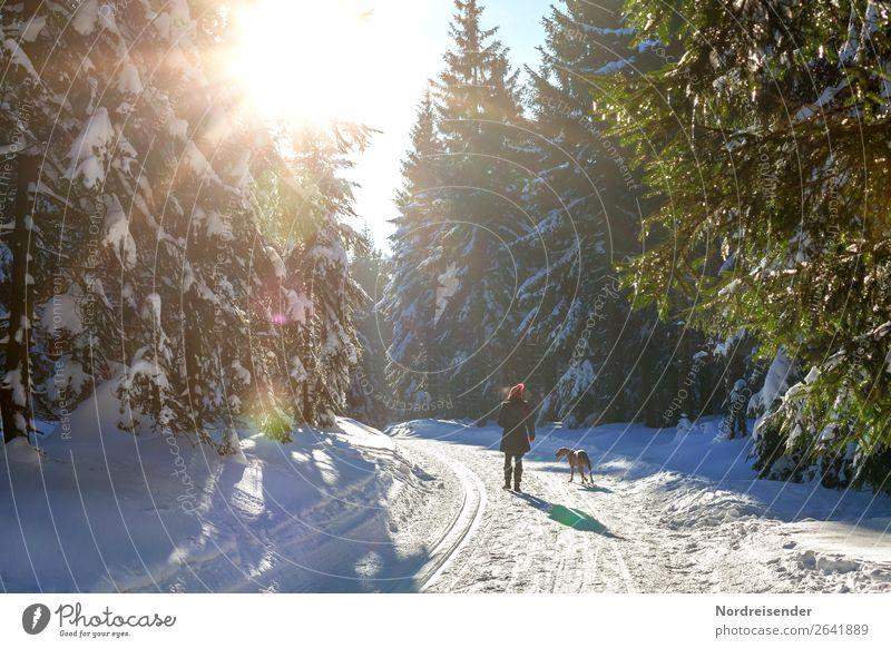 Winterspaziergang Ausflug Schnee Winterurlaub wandern Weihnachten & Advent Mensch feminin Frau Erwachsene Natur Landschaft Sonne Baum Wald Wege & Pfade Tier