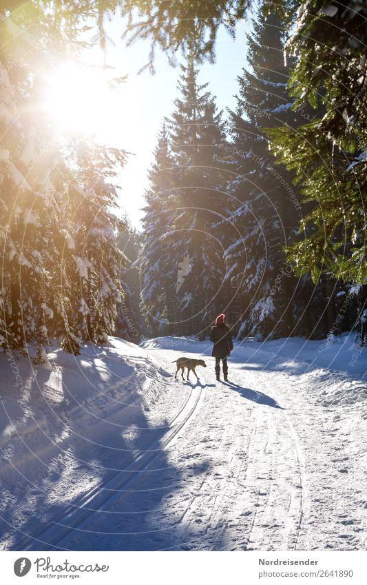 Winterspaziergang Frau Mensch Natur Hund Landschaft Sonne Baum ruhig Wald Erwachsene Leben kalt Wege & Pfade feminin Schnee