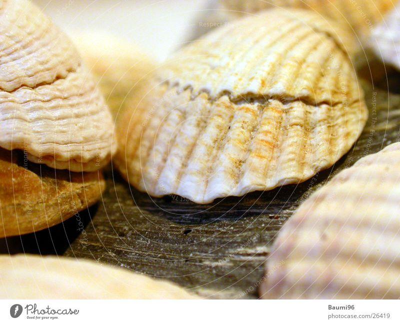Muscheln Strand Ferien & Urlaub & Reisen Meer Sonne