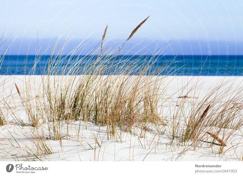 Ostsee Ferien & Urlaub & Reisen Sommer Sommerurlaub Sonne Strand Meer Insel Natur Landschaft Sand Wasser Himmel Frühling Herbst Schönes Wetter Gras Nordsee