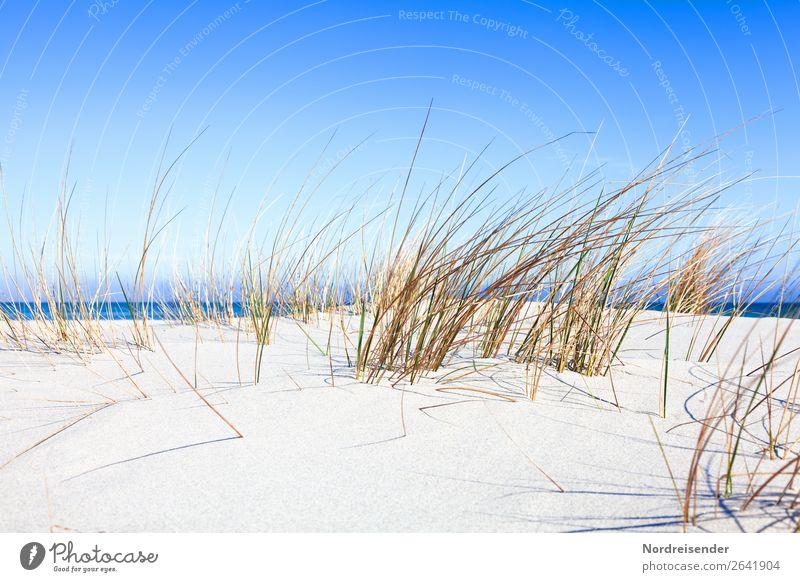 Dünengras an der Ostsee Ferien & Urlaub & Reisen Tourismus Camping Sommer Sommerurlaub Strand Meer Natur Landschaft Sand Wasser Schönes Wetter Pflanze Gras