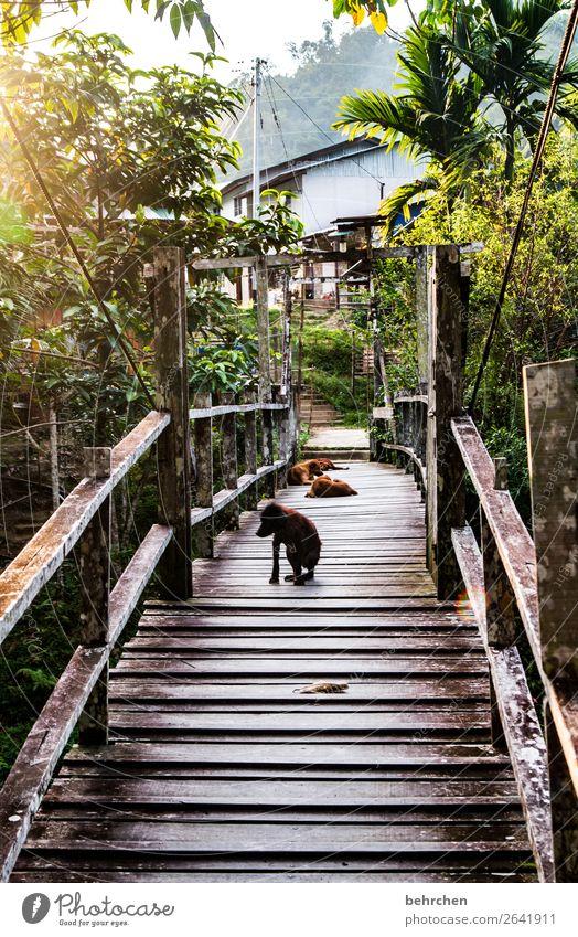 müde wachposten Ferien & Urlaub & Reisen Natur Hund schön Landschaft Baum Ferne Tourismus außergewöhnlich Freiheit Ausflug träumen Idylle Abenteuer genießen