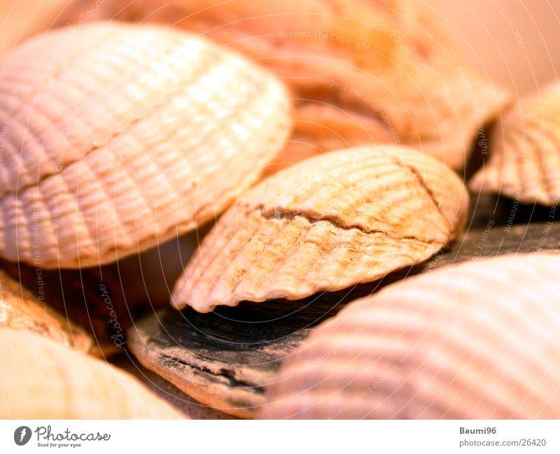 Muscheln Sonne Meer Strand Ferien & Urlaub & Reisen