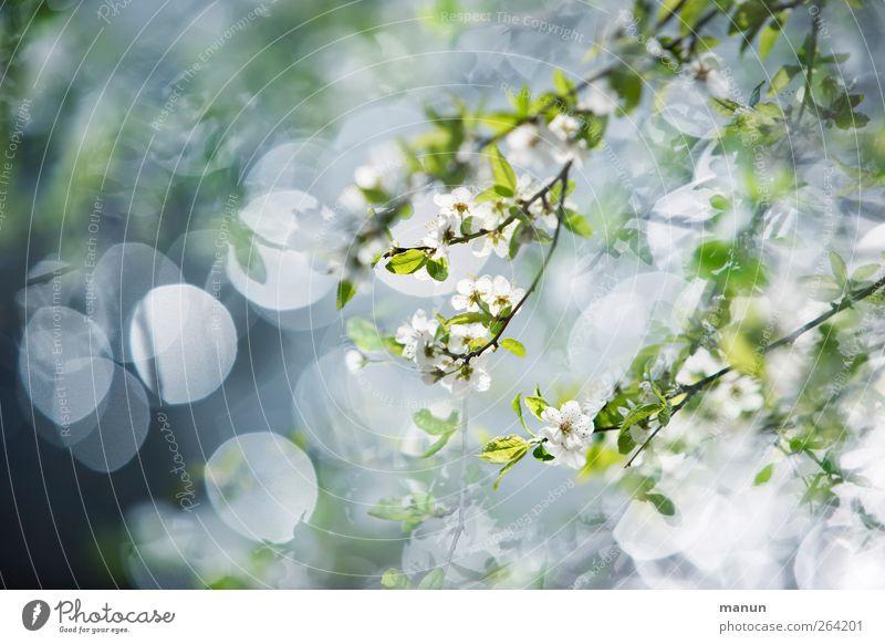 geblümt Natur Frühling Baum Sträucher Blatt Blüte Zweige u. Äste Blühend hell Kitsch Frühlingsgefühle zartes Grün Farbfoto Außenaufnahme Menschenleer