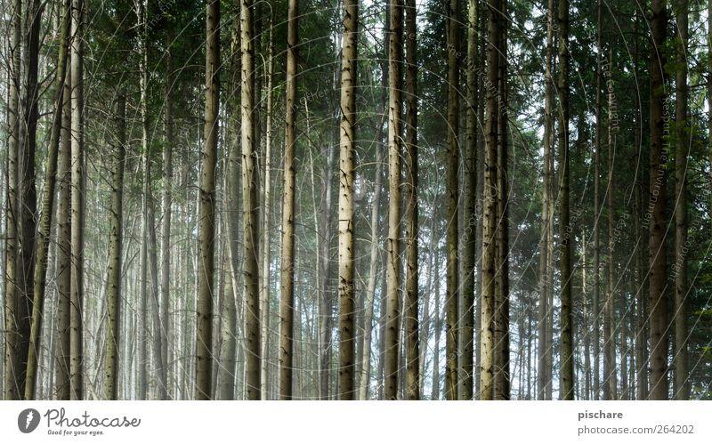 400 Bäume Natur grün Baum Wald dunkel natürlich