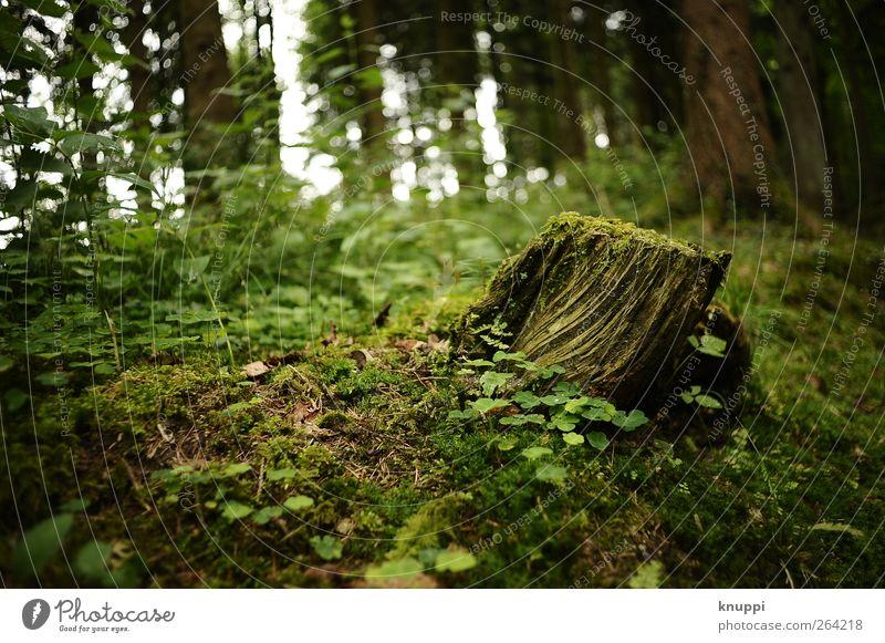 Märchenwald Umwelt Natur Pflanze Sonnenlicht Sommer Schönes Wetter Baum Sträucher Moos Wildpflanze Wald Wachstum alt grün schwarz Baumstamm Baumstumpf Farbfoto