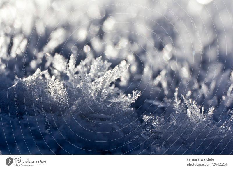 Winter Eiskristalle Umwelt Natur Sonnenlicht Wetter Frost Schnee frieren glänzend Blick ästhetisch außergewöhnlich frisch kalt blau weiß ruhig einzigartig Klima