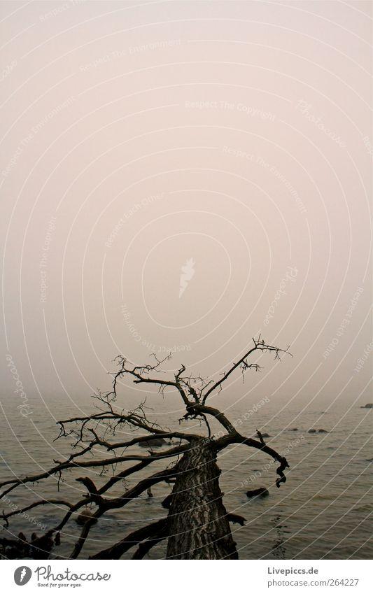 Am gelben Ufer Himmel Natur alt Wasser Baum Pflanze schwarz dunkel grau Küste Nebel liegen ästhetisch Baumstamm Nebelbank umgefallen