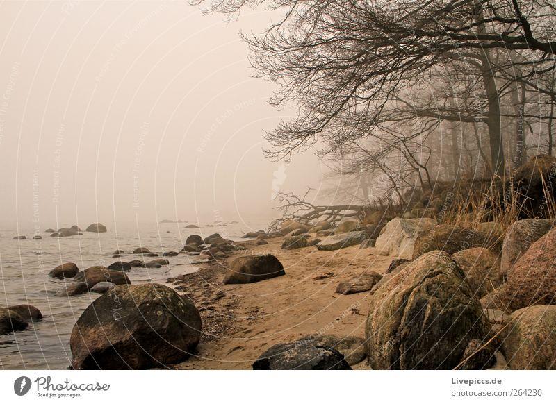 Am gelben Ufer. Ausflug Natur Landschaft Pflanze Sand Wasser schlechtes Wetter Nebel Baum Sträucher Küste Menschenleer dunkel gruselig kalt grau schwarz