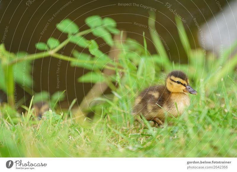 satt und zufrieden Natur Pflanze blau grün weiß Erholung Tier Blatt schwarz Tierjunges gelb Frühling Wiese Bewegung Glück Gras