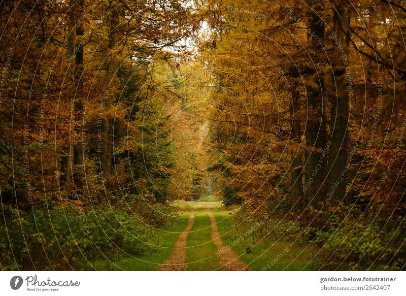 Herbstwege Natur Landschaft Pflanze Erde Sand Himmel Schönes Wetter Baum Gras Sträucher Blatt Wald fantastisch Freundlichkeit positiv braun gelb gold grau grün
