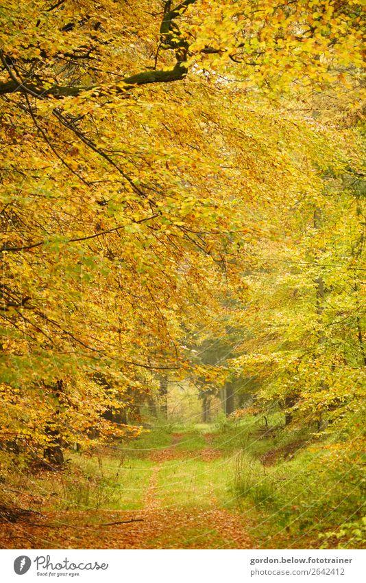 #Herbst/ Wege ins Nichts Umwelt Natur Landschaft Pflanze Erde Baum Gras Sträucher Blatt Wildpflanze Wald entdecken elegant braun gelb grau grün orange schwarz