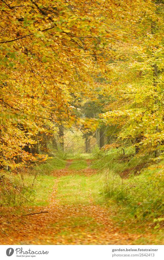 #Herbst elegant Ferien & Urlaub & Reisen wandern Natur Landschaft Pflanze Urelemente Erde Baum Gras Sträucher Blatt Wildpflanze Park Wald Unendlichkeit braun