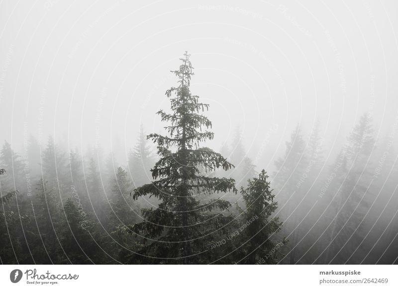 Nebel Wald Bäume Erholung ruhig Meditation Ferien & Urlaub & Reisen Tourismus Ausflug Abenteuer Ferne Freiheit Expedition Sommerurlaub Berge u. Gebirge wandern