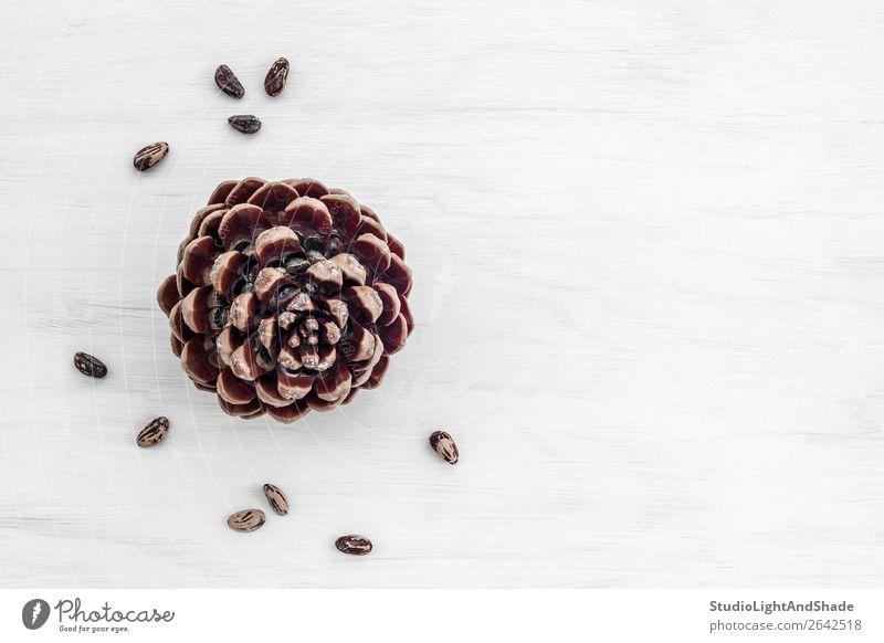 Pinienzapfen und Nüsse auf weißem Holzgrund Ernährung Essen Vegetarische Ernährung Natur einfach natürlich braun Farbe Zapfen Kegel Kiefer Nut Muttern Saatgut