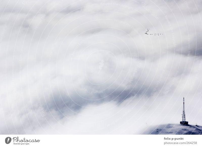 vögelchen Umwelt Natur Winter Alpen Berge u. Gebirge Gipfel Schneebedeckte Gipfel Gletscher ästhetisch Kitsch Klischee blau Strommast Vogel Panorama (Aussicht)