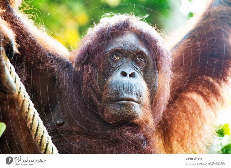 ich bleibe! Ferien & Urlaub & Reisen schön Tier Ferne Gesicht Auge Traurigkeit Tourismus außergewöhnlich Freiheit Ausflug nachdenklich Wildtier Abenteuer