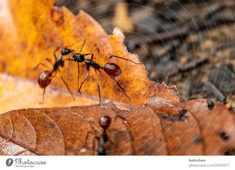 dreiklang | drei fleißige ameisen Ameise tiere Wildnis Insekt Wald Regenwald Fluss Urwald Riesenameise Blatt laub Tier Außenaufnahme Farbfoto Makroaufnahme