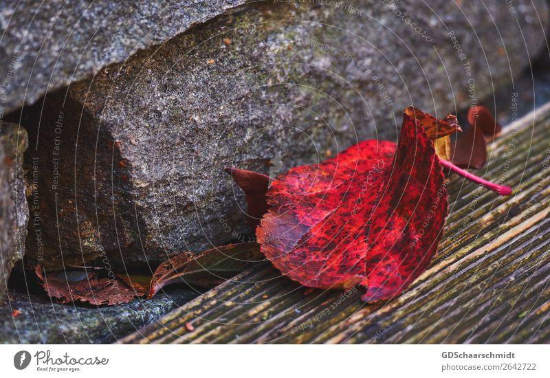 Farbenrausch im Herbst Umwelt Natur Blatt Terrasse Garten Stein Holz beobachten entdecken Erholung Traurigkeit Wachstum wandern weinen ästhetisch