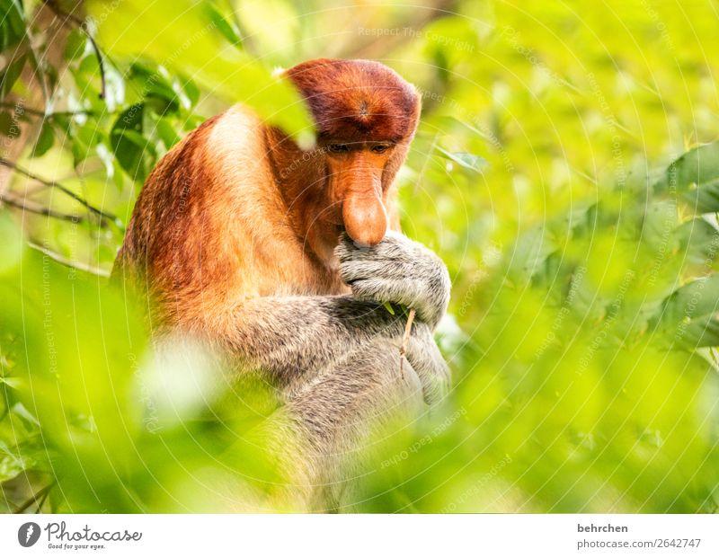 der denker | gedankenspiele Ferien & Urlaub & Reisen Natur Baum Tier Blatt Ferne Tourismus außergewöhnlich Freiheit Denken Ausflug Wildtier Abenteuer