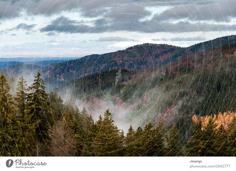 Herbst im Schwarzwald Umwelt Natur Landschaft Pflanze Urelemente Himmel Nebel Nadelbaum Wald Berge u. Gebirge Jahreszeiten Stadt Furtwangen Farbfoto