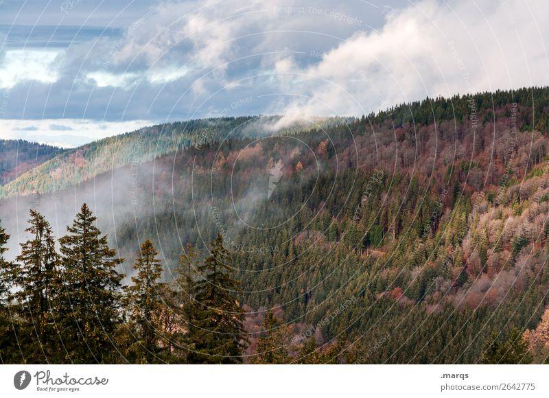 Herbst im Schwarzwald Umwelt Natur Landschaft Pflanze Urelemente Himmel Wolken Nebel Nadelbaum Wald Berge u. Gebirge Jahreszeiten Stadt Furtwangen Farbfoto