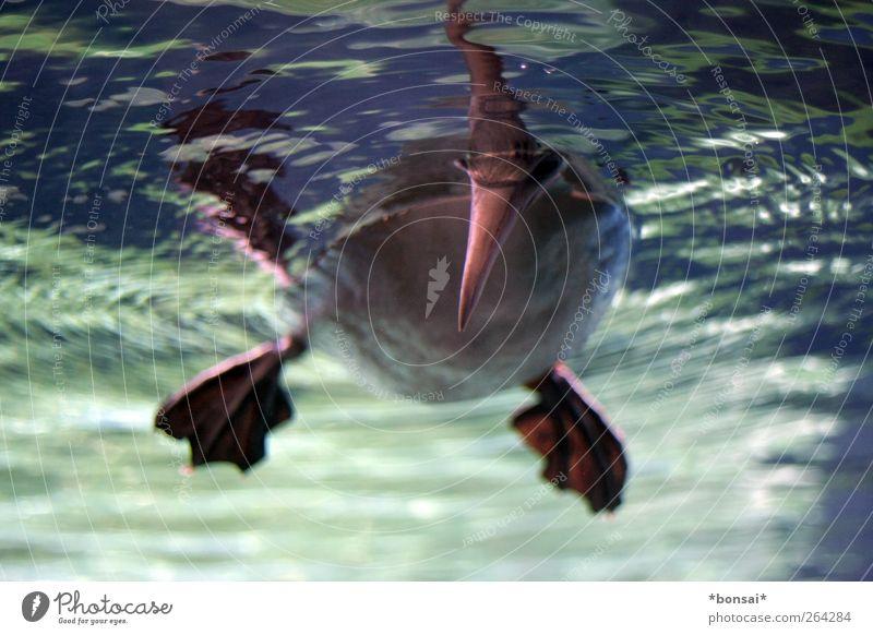 moin Natur Wasser Tier Vogel Zufriedenheit Schwimmen & Baden nass Tierfuß frisch Feder beobachten Neugier tauchen Zoo hängen Schnabel