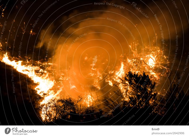 Nahaufnahme der Flammen Brennende Bürste auf dem Hügel schön Umwelt Natur Landschaft Coolness einzigartig natürlich wild Angst Farbe Zerstörung Feuer Lauffeuer