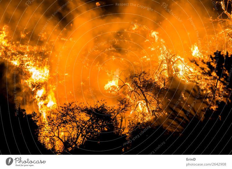 Nahaufnahme Feuer Flammen Glut Brennender Hügel schön Umwelt Natur Landschaft Coolness einzigartig natürlich wild Angst Farbe Zerstörung Bürste Lauffeuer