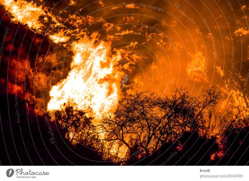 Nahaufnahme Pinsel in Silhouette mit Flammen dahinter schön Umwelt Natur Landschaft Hügel Coolness einzigartig natürlich wild Angst Farbe Zerstörung Feuer