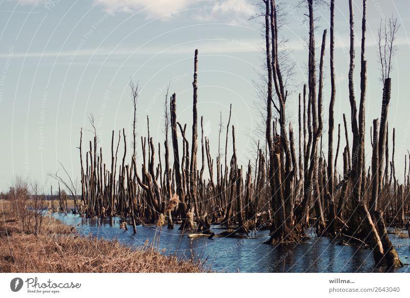 der moor hat seine schuldigkeit getan ... Natur Landschaft Umwelt Vergänglichkeit kahl Sumpf Überleben Moor Usedom Moorsee