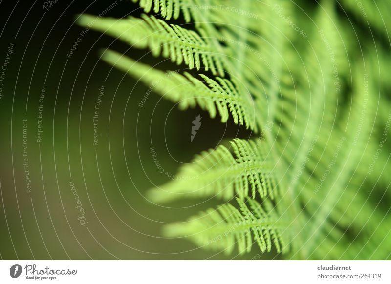 abgefarn! Natur grün Pflanze Sommer Blatt Farn filigran Blattgrün Wildpflanze Farnblatt