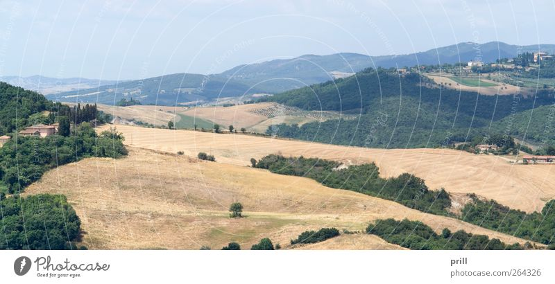 Tuscany landscape Pflanze Sommer Haus Landschaft Architektur Gebäude Feld Sträucher Kultur Idylle Italien Landwirtschaft Bauernhof Ackerbau Tradition Flur
