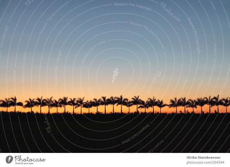 Palmen zählen Himmel Natur Baum Ferien & Urlaub & Reisen Pflanze Wald Umwelt Landschaft Horizont Zufriedenheit Feld Tourismus ästhetisch Wachstum stehen