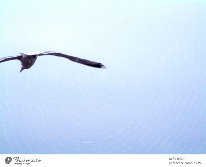 Vogelfrei Himmel Meer Luft Vogel fliegen