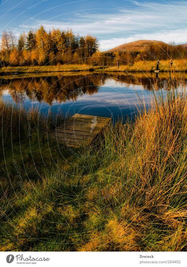Herbstliche Idylle Mensch Umwelt Natur Landschaft Wasser Schönes Wetter Baum Gras Sträucher Seeufer Flussufer Teich Steg blau braun mehrfarbig gelb gold grün