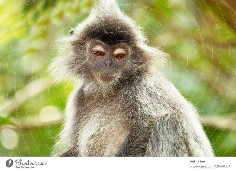 freitagsaugenaufschlag Ferien & Urlaub & Reisen Natur schön Baum Erholung Tier Ferne Traurigkeit Tourismus außergewöhnlich Freiheit Ausflug träumen Wildtier