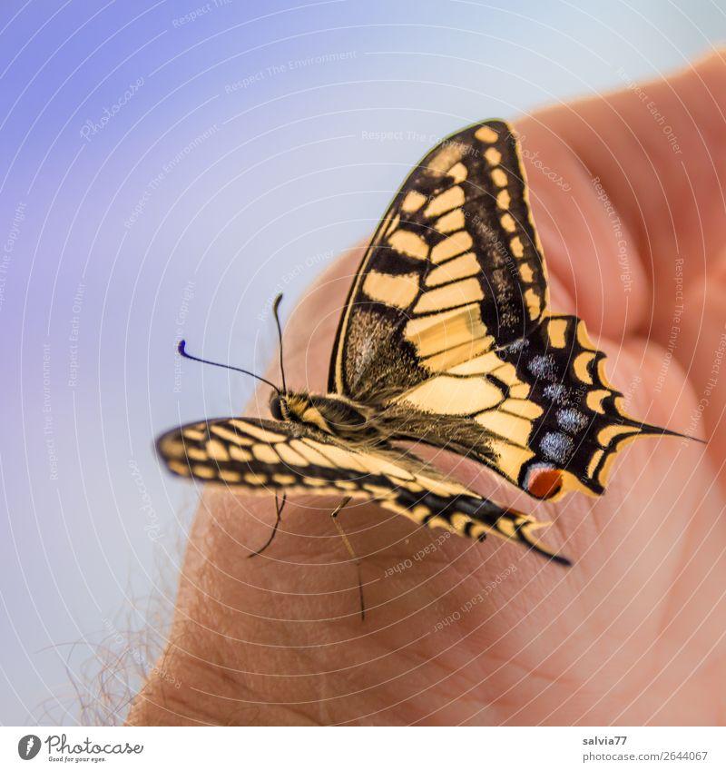 Verwandlung | vollendet Natur Sommer schön Hand Tier Leben Glück elegant ästhetisch einzigartig Flügel Wandel & Veränderung berühren Insekt Schmetterling