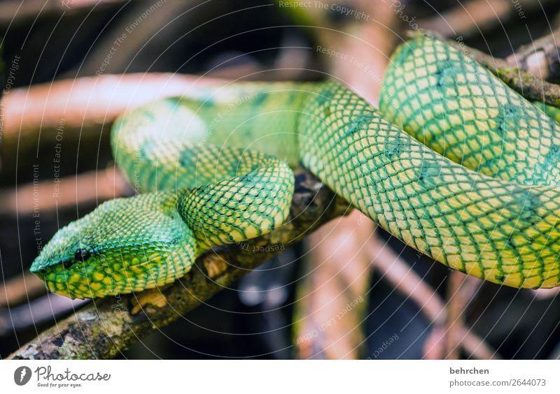 giftig Ferien & Urlaub & Reisen schön grün Tier Ferne Tourismus außergewöhnlich Freiheit Ausflug wild Angst Wildtier Abenteuer fantastisch gefährlich beobachten