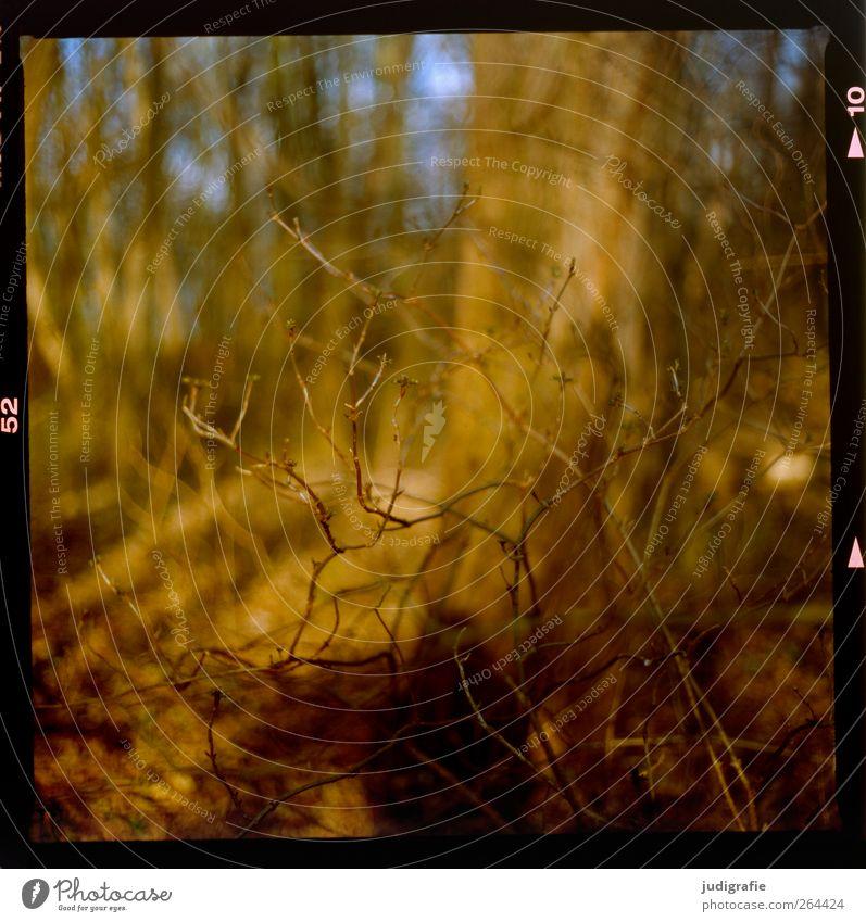 Wald Umwelt Natur Landschaft Pflanze Klima Baum Sträucher Wachstum Wärme wild braun Stimmung Farbfoto Außenaufnahme Menschenleer Tag