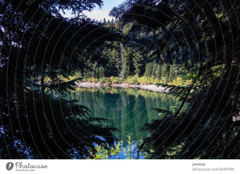See Umwelt Natur Landschaft Pflanze Erde Wasser Baum Berge u. Gebirge grün Farbfoto Außenaufnahme Menschenleer Tag Zentralperspektive Blick in die Kamera
