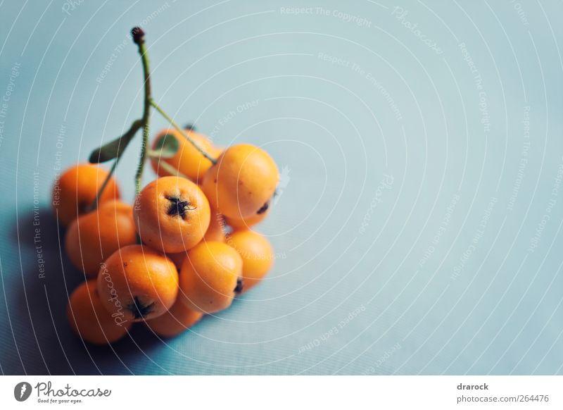 Natur blau grün Pflanze Umwelt klein orange Frucht elegant Wachstum exotisch Beeren Beerensträucher