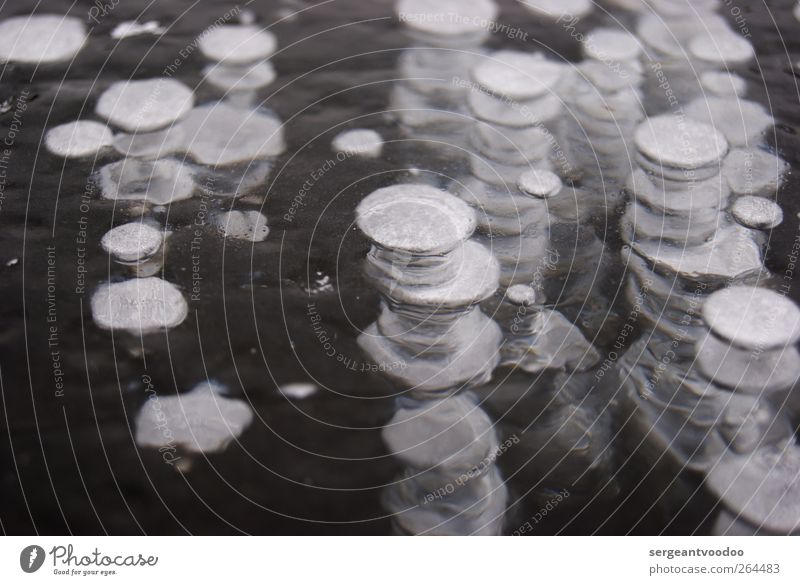 Bubbles II Natur Wasser Winter ruhig Erholung Umwelt Tod kalt Bewegung See träumen Eis Zeit Wetter Kraft Klima