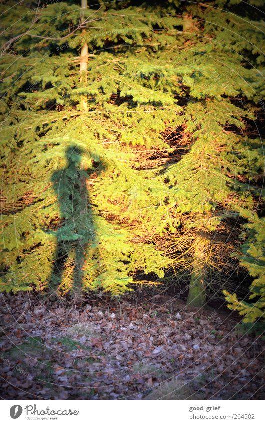 ausschau halten Mensch Natur Jugendliche Baum Freude Erwachsene Ferne Freiheit Beine Stimmung Körper Rücken 18-30 Jahre Freizeit & Hobby wandern maskulin